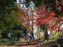 僧侶と巡る「高幡不動尊 参拝の旅」10