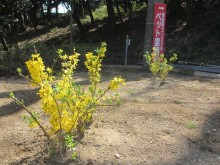 釈迦寺霊園樹木入替8