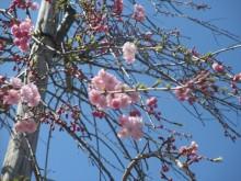 釈迦寺霊園樹木入替7