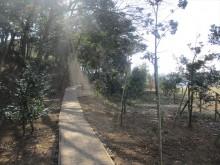 釈迦寺霊園樹木入替6