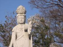 釈迦寺霊園樹木入替2
