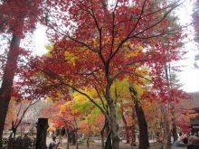 僧侶と巡る「喜多院と平林寺参拝の旅」2