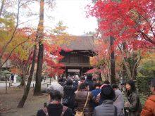 僧侶と巡る「喜多院と平林寺参拝の旅」3