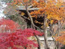 僧侶と巡る「喜多院と平林寺参拝の旅」4