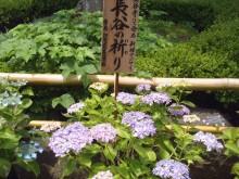 鎌倉極楽ツアー5